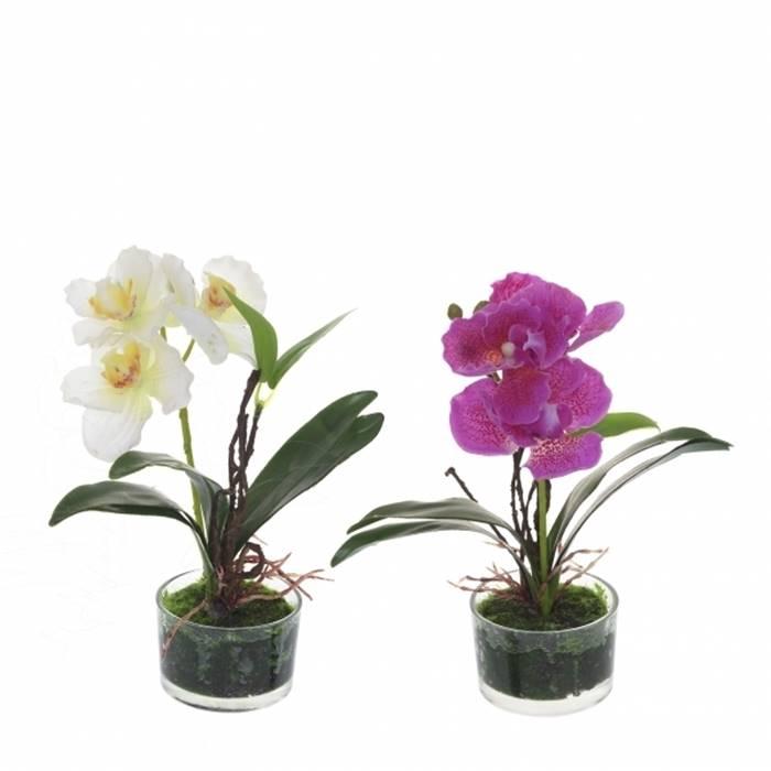 Цветок орхидея в адлере купить, букеты дешево воронеж